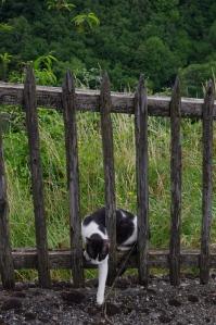 Labastide cat
