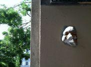 Face sculpture in Montmartre, Paris, France