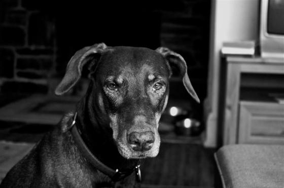 Molly-dog