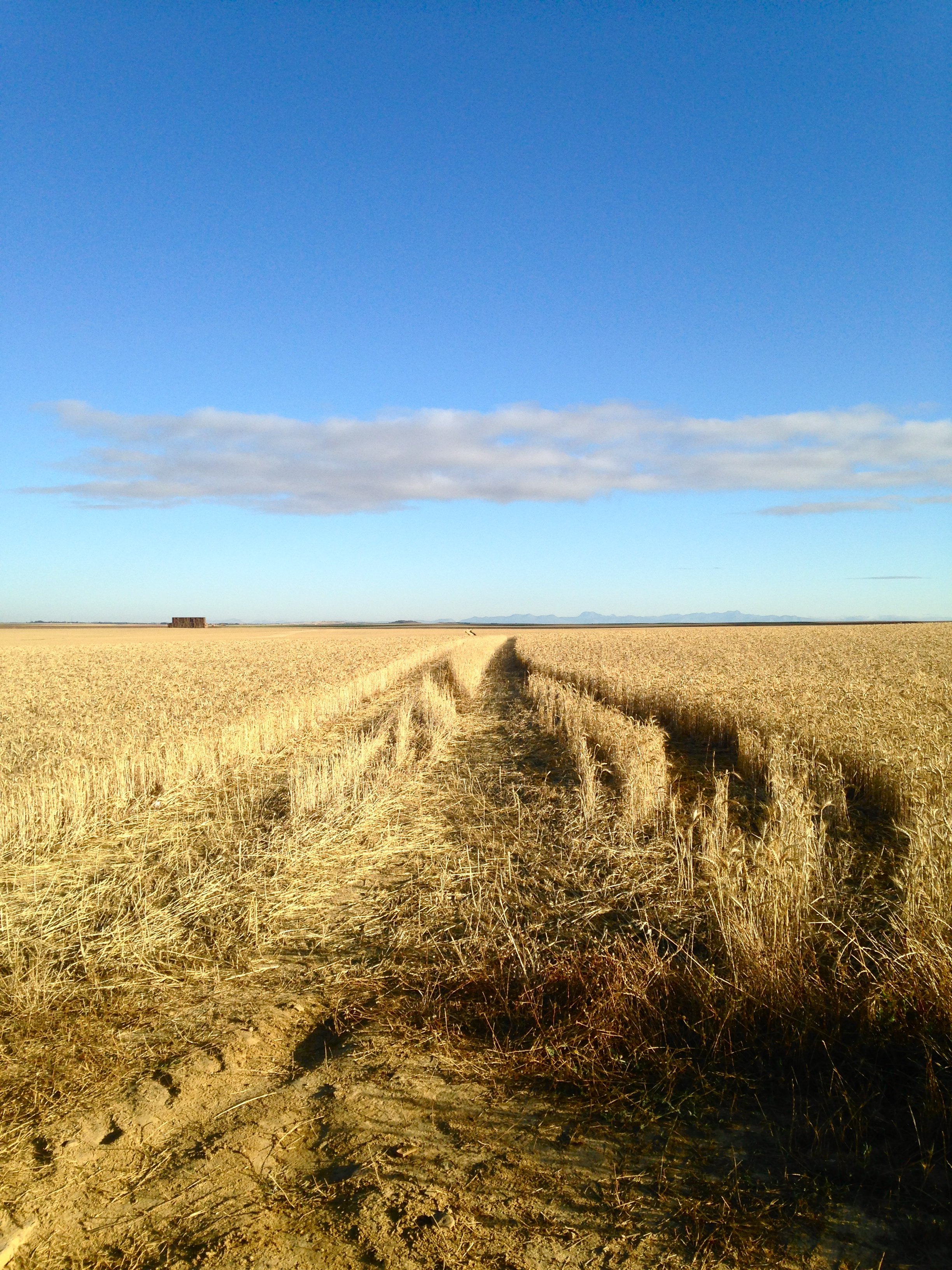wheat field, the meseta