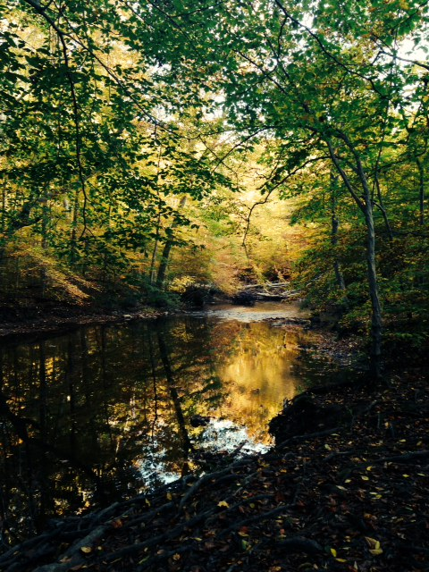 Ridley Creek State Park, October 2014