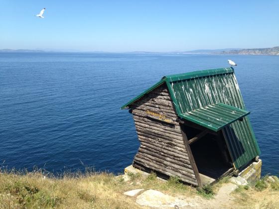 Islas Cies, seagulls