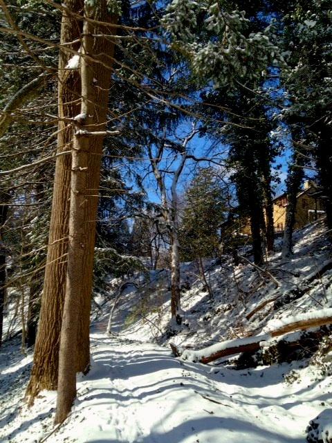 Photo of Week #1: Snowy Walk