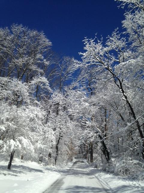 Winter walk through my neighborhood