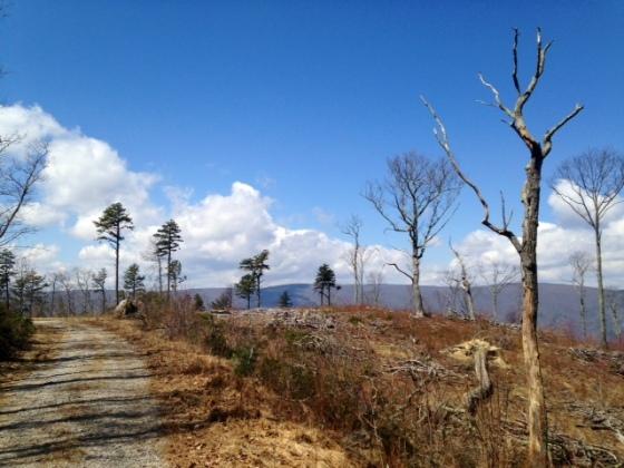 Somewhere near John's Creek Mountain Hike