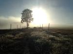 rising-sun-camino-de-primitivo